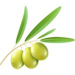 olivok.net
